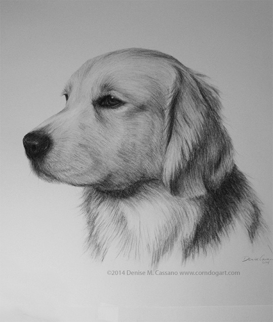 Simba pet portrait, Denise Cassano