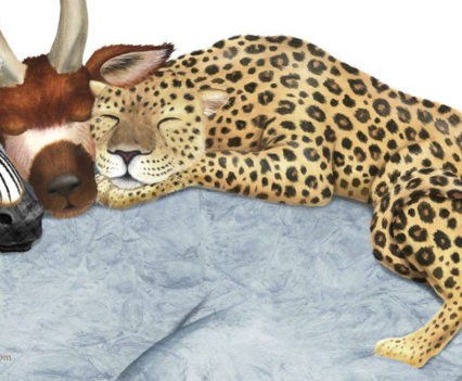 denise-cassano-sleeping-animals